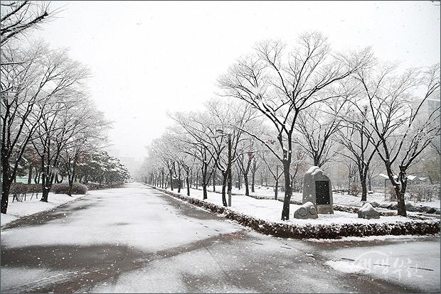 ▲ 나뭇가지와 공원 산책로에도 쌓인 흰눈.