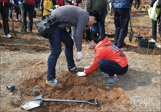 ▲ 땀 흘리며 심은 나무를 다져주는 젊은 연인들