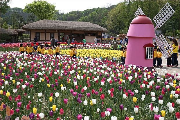 ▲ 자연생태박물관 앞 정원에 만발한 튤립