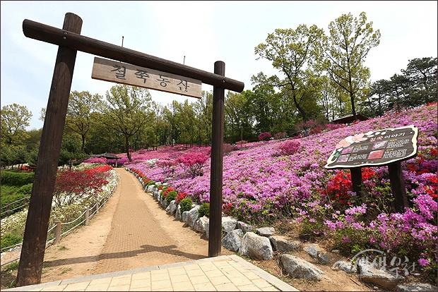 ▲ 고강동 선사공원의 철쭉동산
