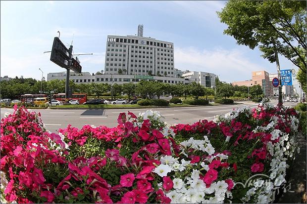 ▲ 꽃꽃한 부천 - 시청 앞 길주로 변
