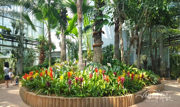 ▲ 부천식물원 아열대식물관이 오는 28일 나비정원으로 조성된다.