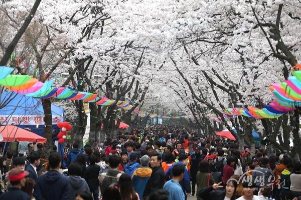 ▲ 지난해 도당산 벚꽃축제에 몰린 인파