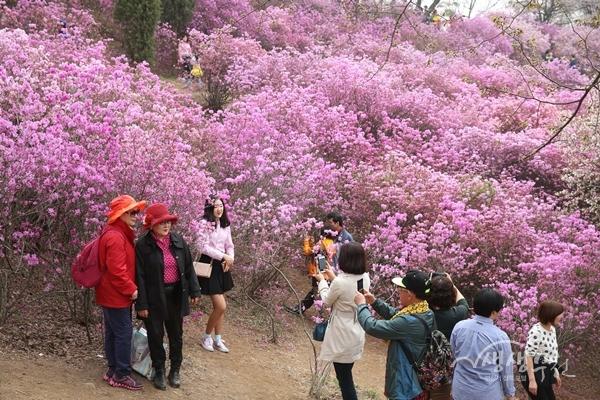 ▲ 지난해 원미산 진달래꽃을 즐기는 시민들