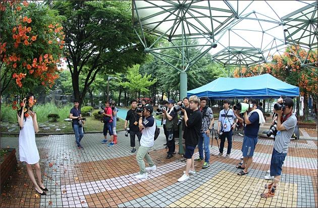 ▲ 점점 열기가 달아오르는 중앙공원 능소화 꽃터널