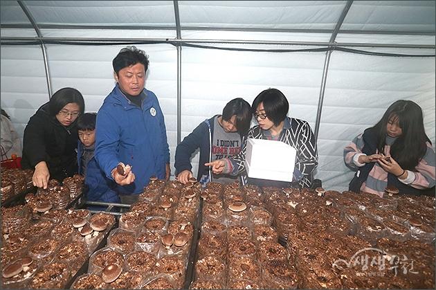 ▲ 시민들과 함께 버섯 수확에 참여한 김만수 시장
