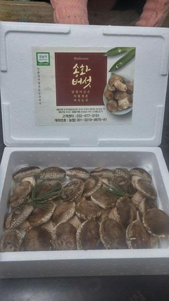 ▲ 상품화된 송화버섯 모습