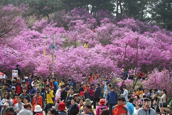 ▲ 진달래꽃이 만개한 원미산 진달래동산을 찾은 인파