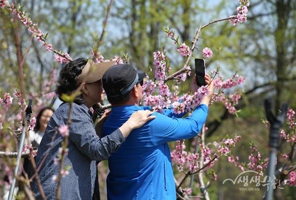 ▲ 춘덕산 복숭아꽃을 즐기는 시민들
