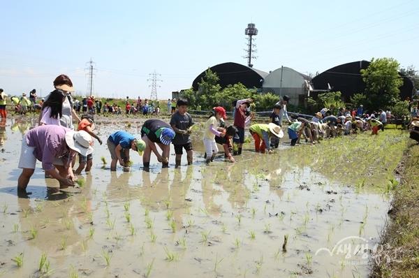 ▲ 친환경 벼농사 손모내기 체험을 즐기고 있는 시민과 어린이들