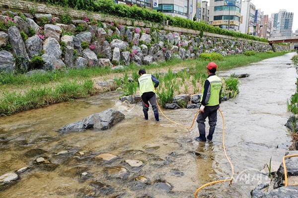▲ 심곡 시민의강 수로 청소 작업