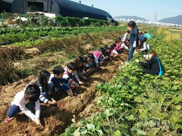 ▲ 친환경 벼농사 체험 프로그램 운영모습