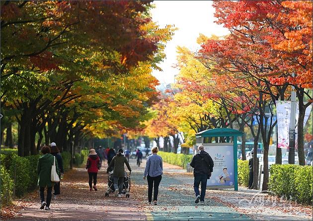 ▲ 중앙공원의 가을