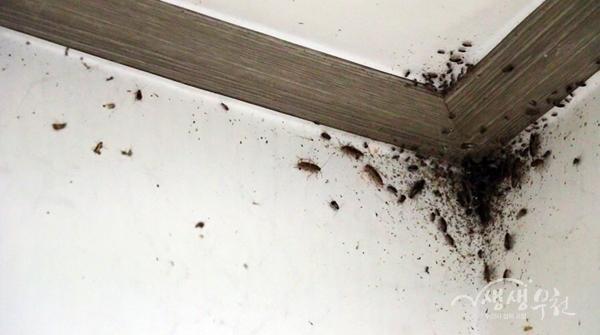 ▲ 방, 화장실, 거실, 주방 벽과 바닥을 온통 바퀴벌레가 뒤덮고 있다. 청소하는 이들의 어깨 위로 바퀴벌레가 뚝뚝 떨어졌다.