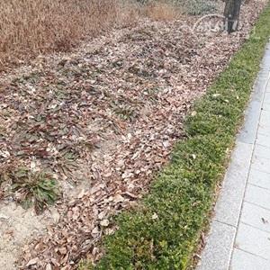 ▲ 낙엽과 음식물 쓰레기로 메워진 거름골