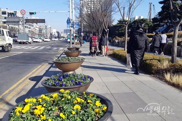 ▲ 봄꽃이 식재된 부천시 도로변