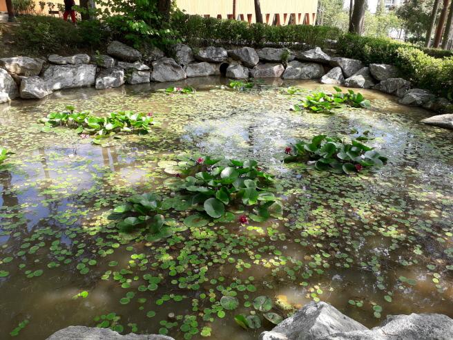 역곡공원 내 연꽃이 핀 연못의 모습.