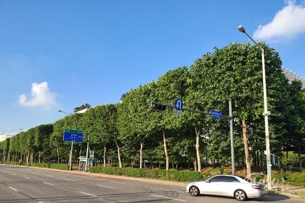 ▲ 부천시는 송내대로 등 4개 주요노선 버즘나무를 대상으로 사각 테마전지를 실시했다.
