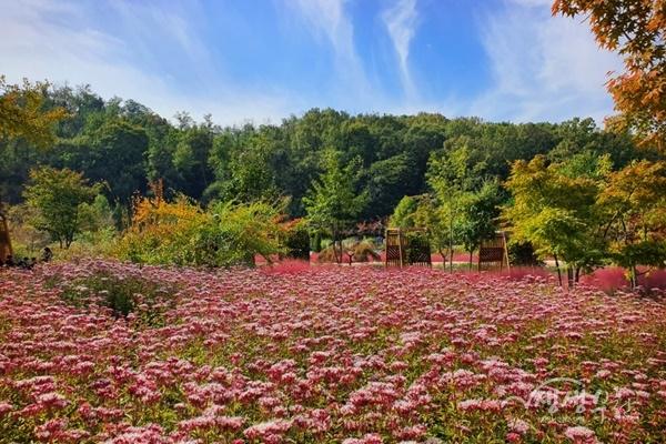 ▲ 가을꽃전시회가 열리는 부천무릉도원수목원 풍경