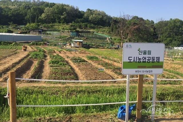 ▲ 부천시 도시농업체험장(시민농장)