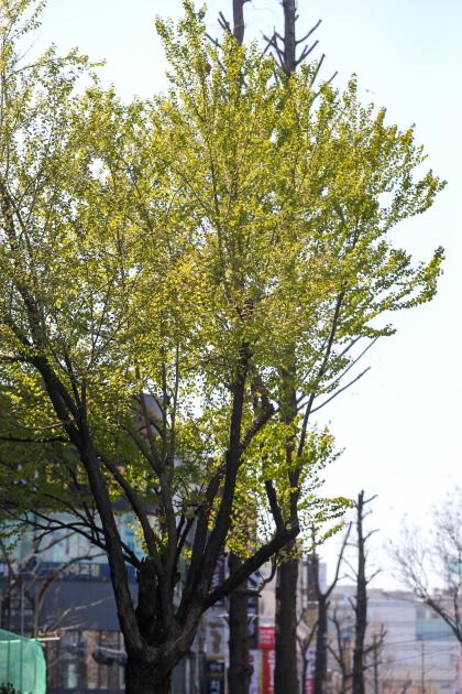 ▲ 새잎들