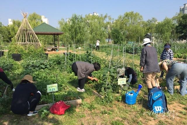 ▲ 시민들이 시민농장에서 자유롭게 농업 활동을 하고 있다