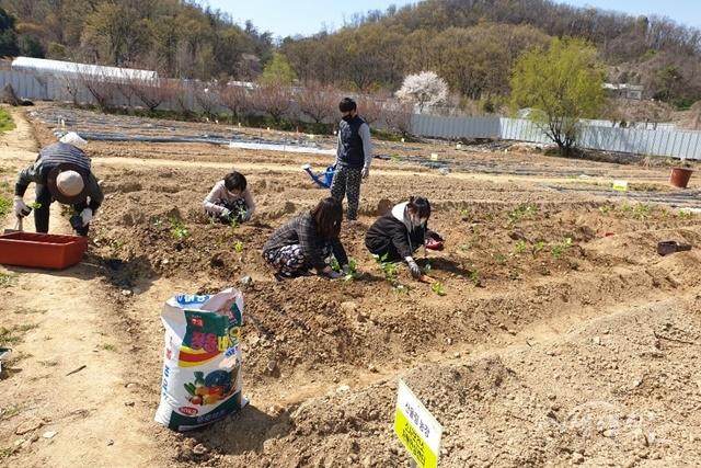 ▲ 소사치매안심센터에서 코로나19가 진정된 이후 경증 치매 어르신이 경작할 수 있도록 산울림 농장에 농작물을 심고 있다