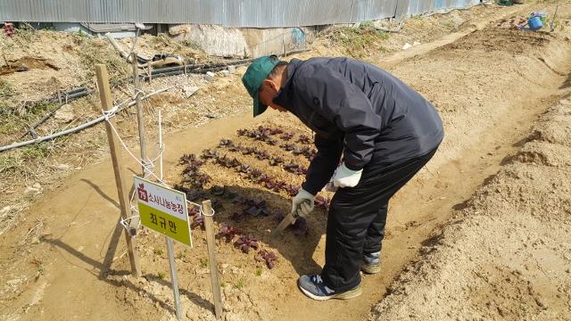 ▲ 도시농부, 최규만 어르신