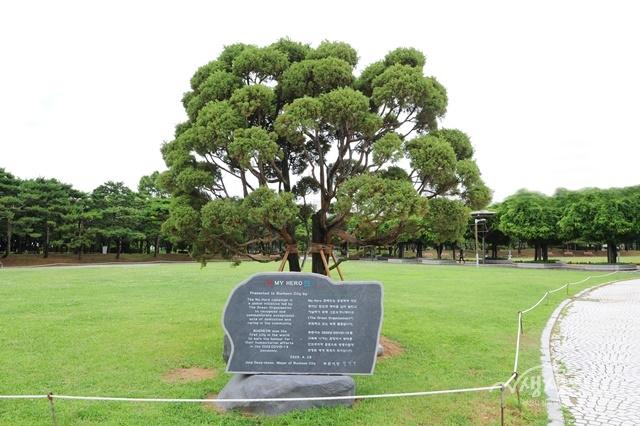 ▲ 중앙공원에 식재한 마이 히어로 기념 나무