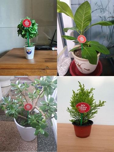 ▲ 'My Hero Tree 1그루 심기' 캠페인에 참가한 반려식물들의 모습<사진 출처: 페이스북>