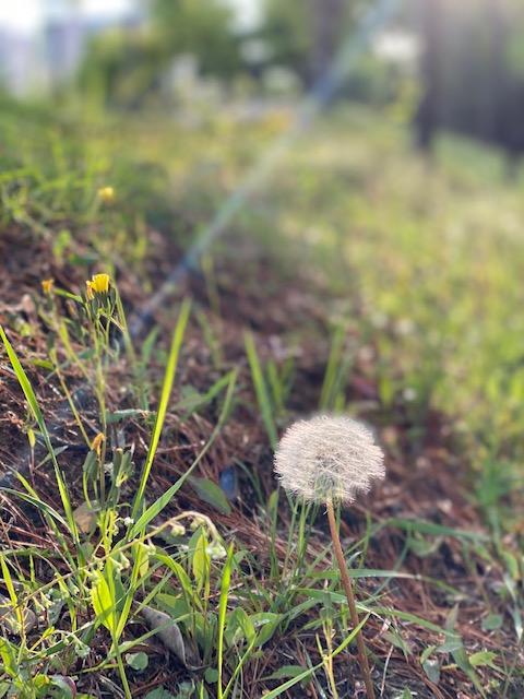 ▲ 예쁜 봄의 꽃들